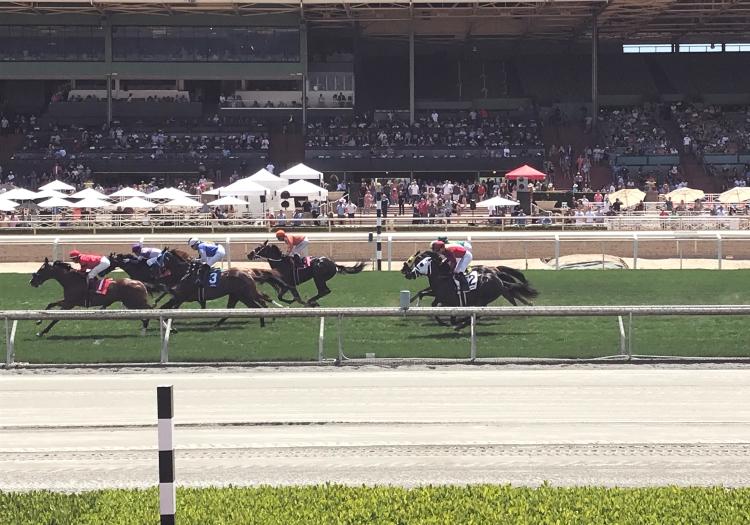 horses_racing